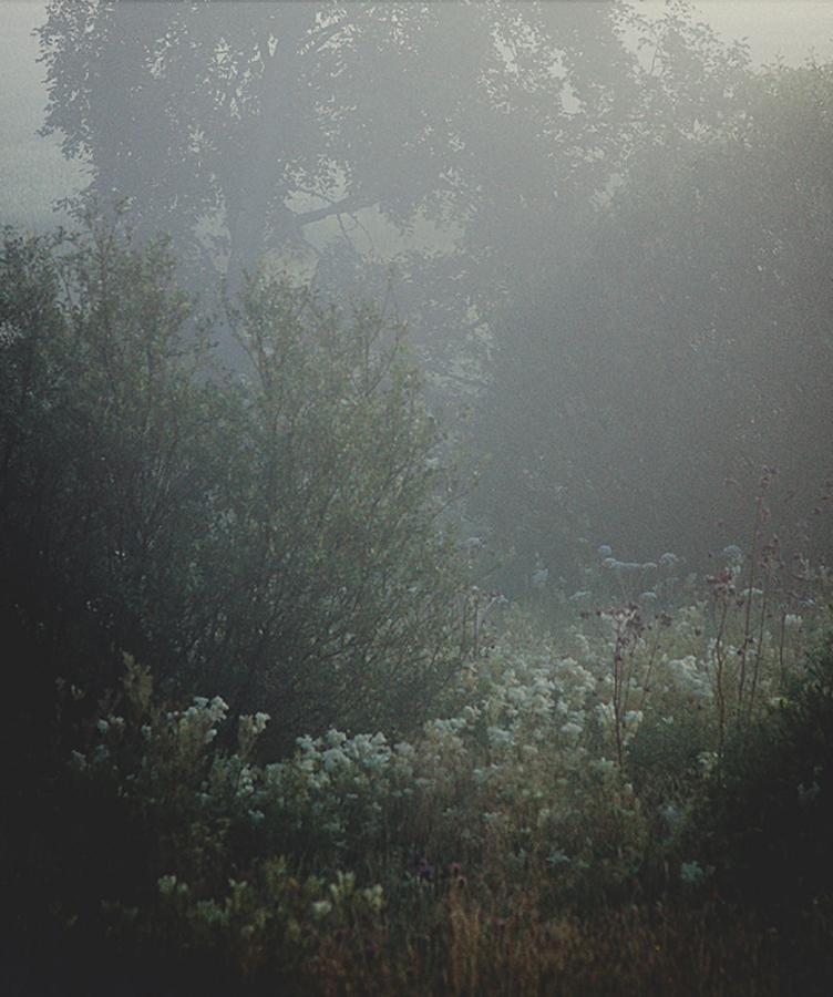 Quiescence (2010)