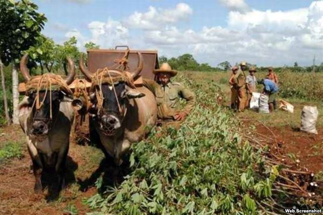 Campo agrícola cubano