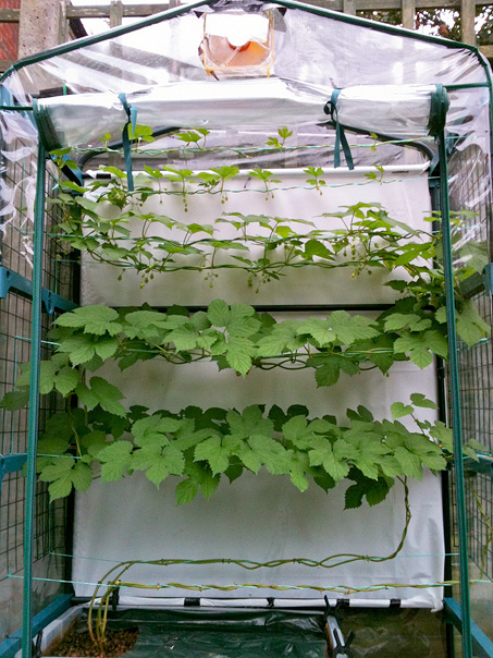 Initial trial plants growing with success - 2016