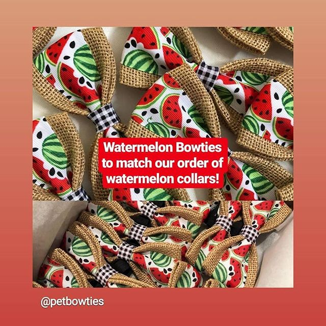 Can't wait to get these in stock!!!! They will match our order of #watermelon #dogcollars perfectly. 🍉🍉🍉🐾🐾🐾 Thank you @petbowties