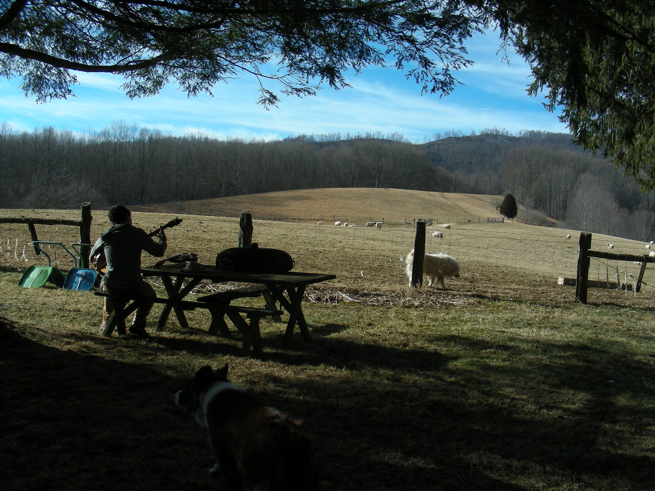Playing music by the hayfield