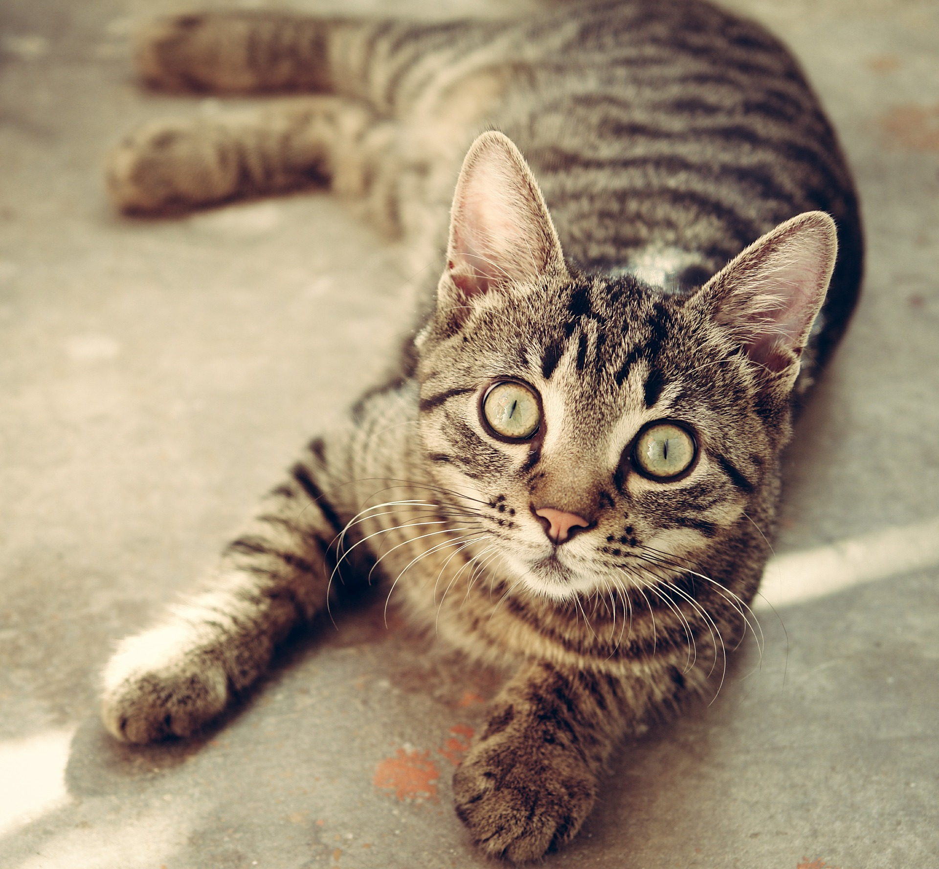 cat-618470_1920.jpg