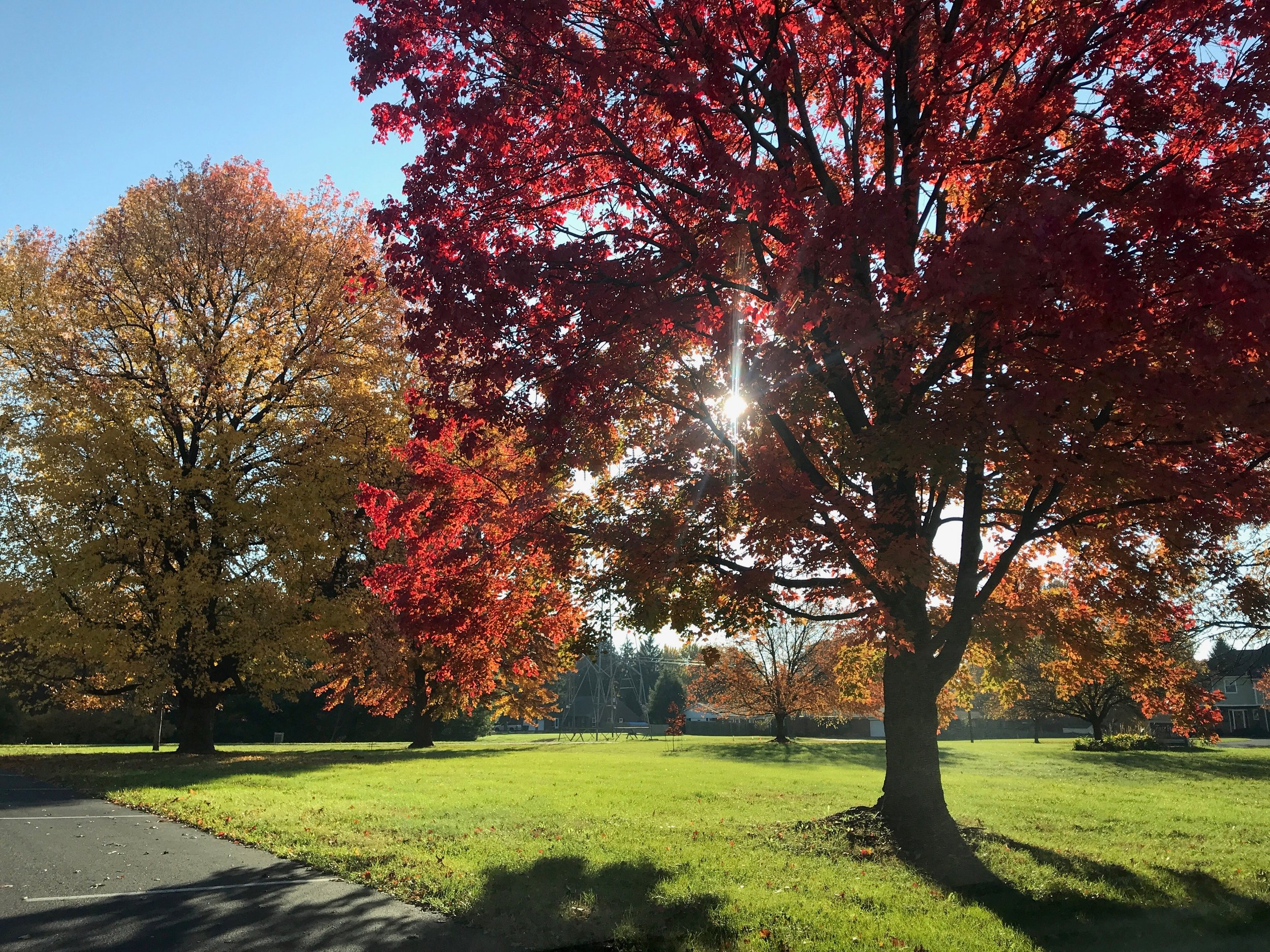 Fall Trees 2017.jpg