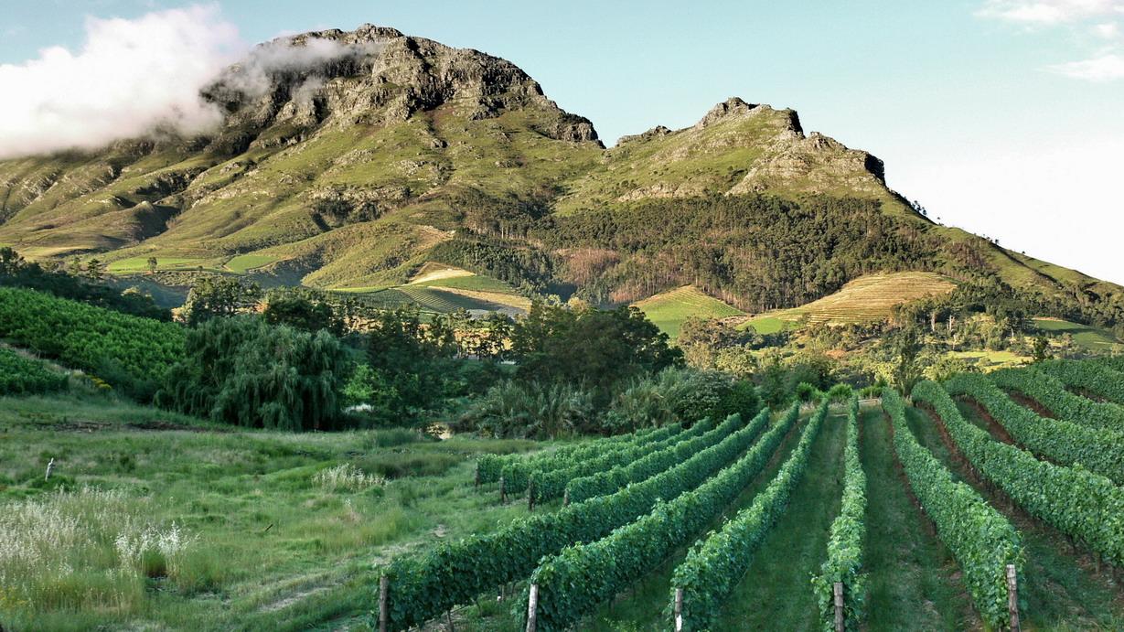 wine-farm-in-stellenbosch.jpg