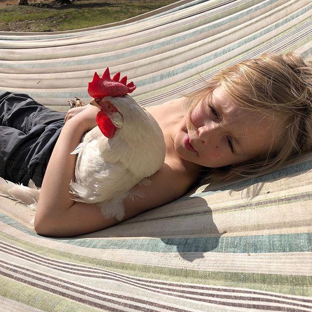 Little known fact: chickens like hammocks. #chicken #hen #leghorn #homeschool #unschool #hudsonvalley #seven #1stgrade #flock #backyard #hammocks #sawkill #kingston #woodstock #home