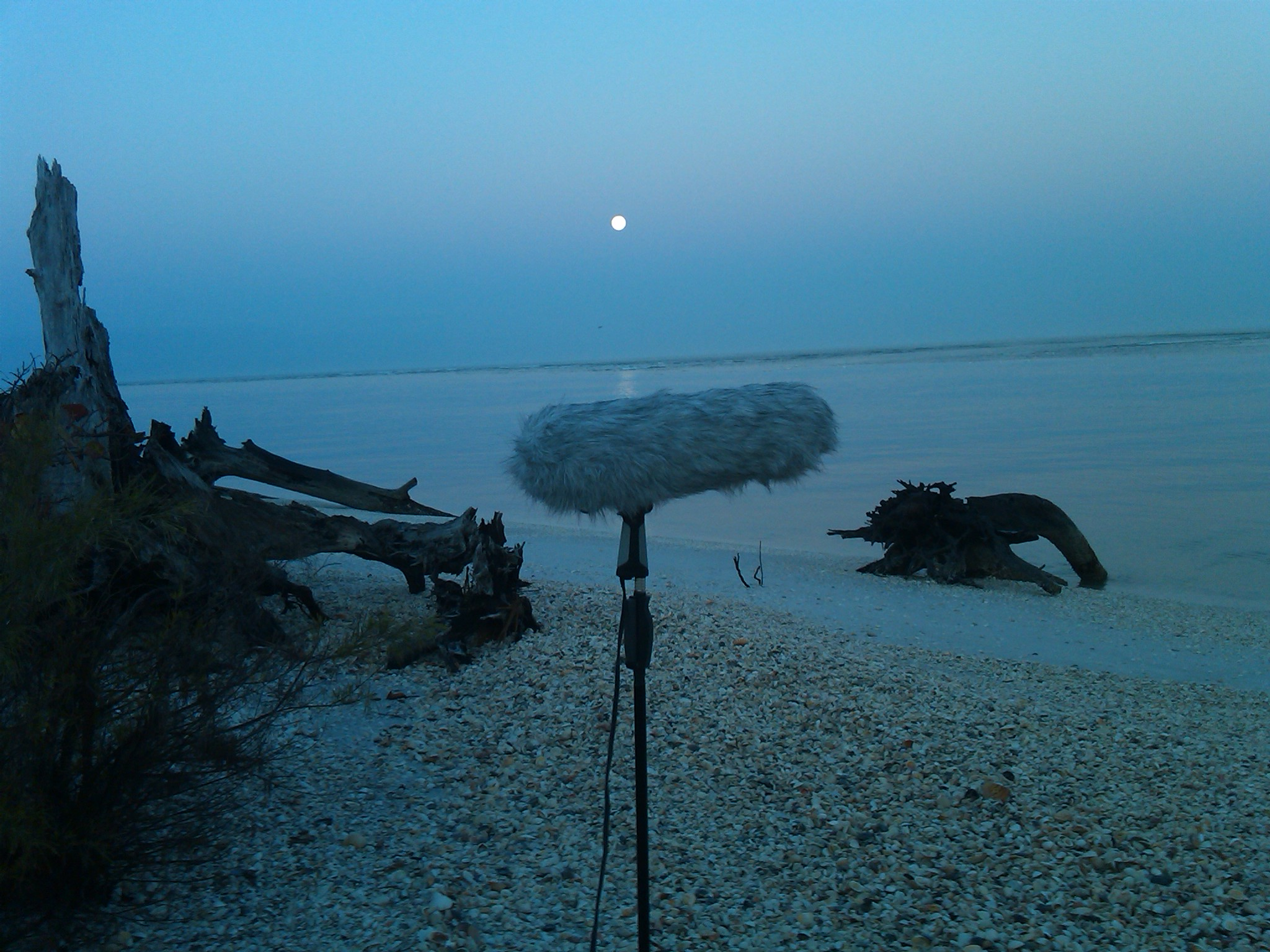 audio_ambience_recording_moon_background_0630am.jpg