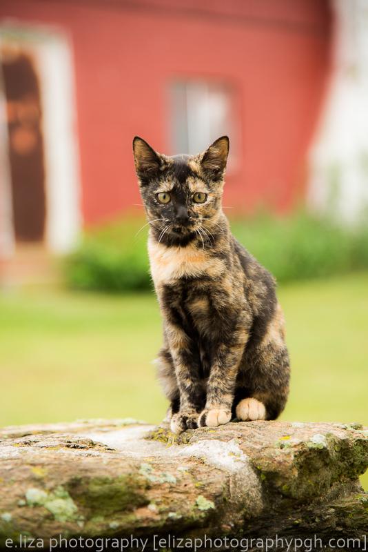 Pet Photography :: e.liza photography :: www.elizaphotographypgh.com