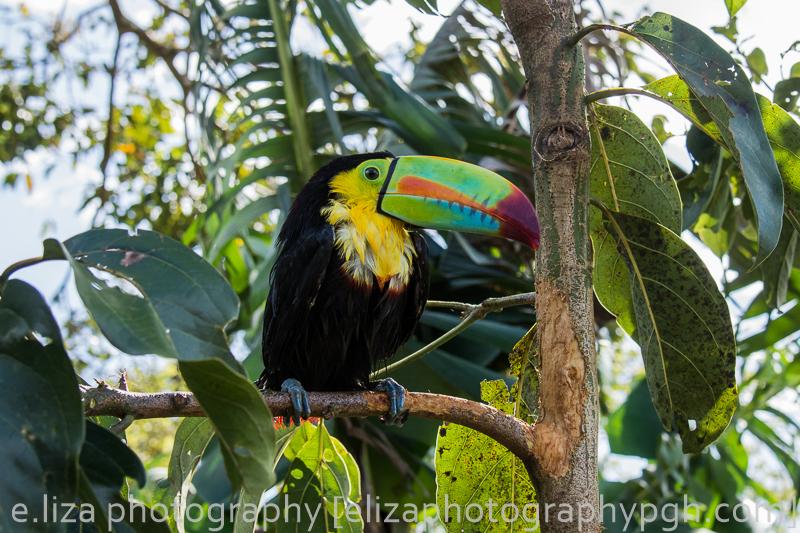 Costa Rica 2015 : www.elizaphotographypgh.com