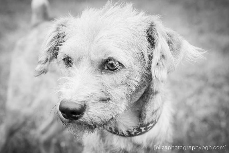 Rescue Dog Photography : Second Chance Sato : www.elizaphotographypgh.com