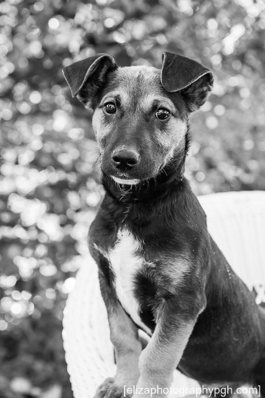 Dog Photography : Pittsburgh : www.elizaphotographypgh.com