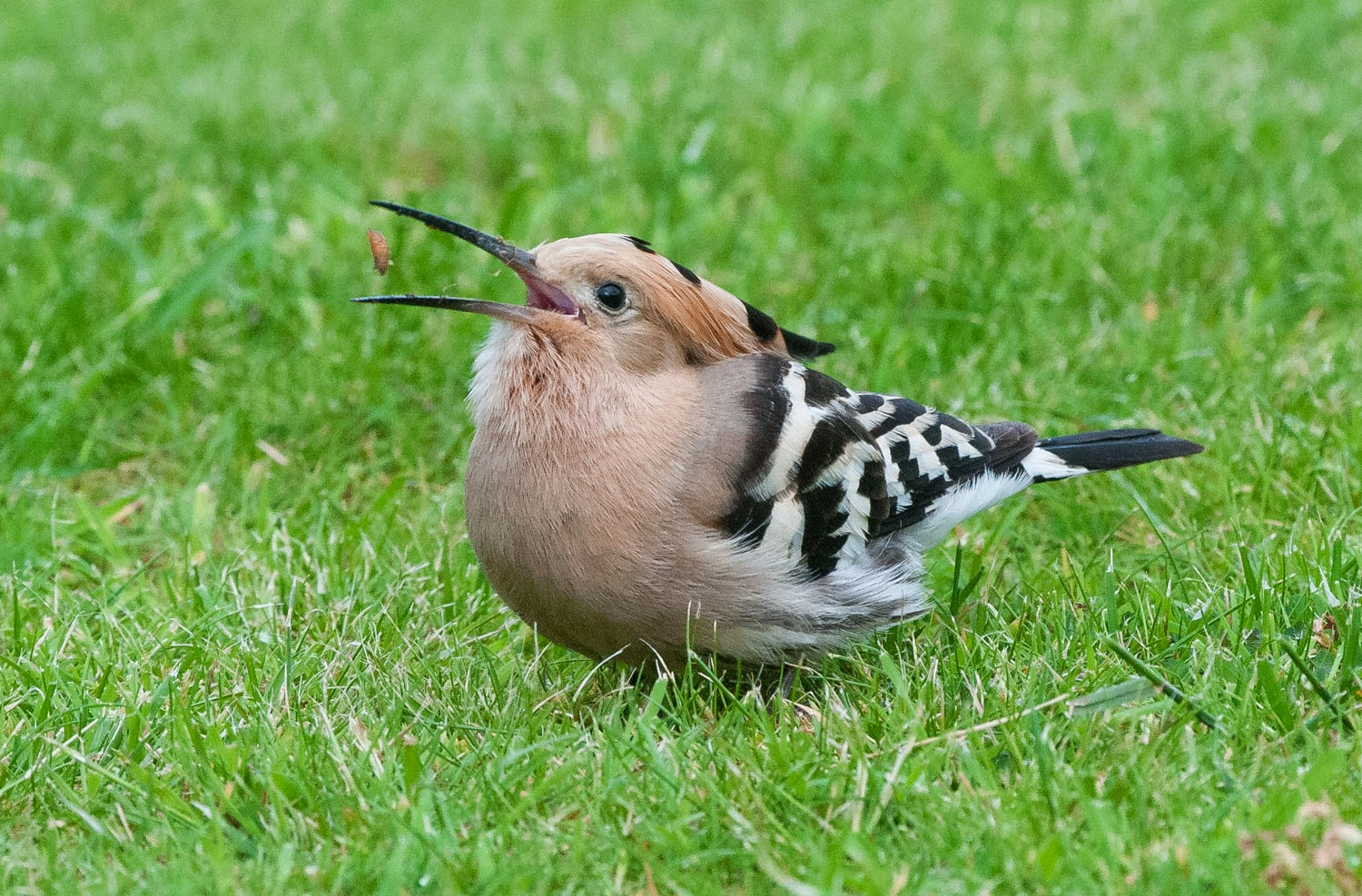 Hoopoe+Saturday+(11+of+11).jpg