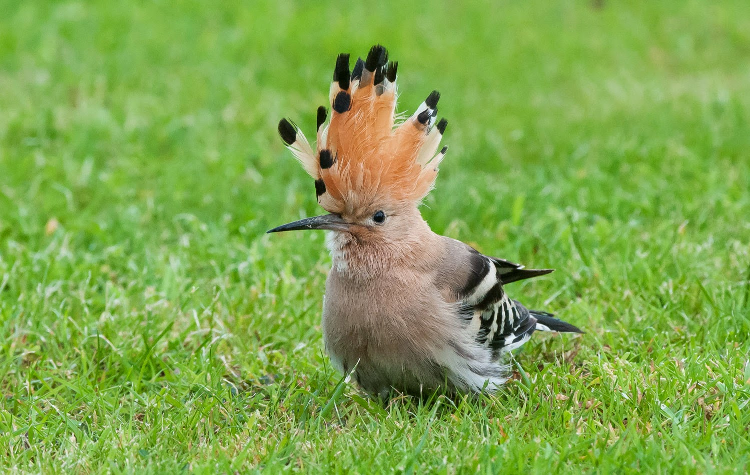 Hoopoe+Saturday+(9+of+11).jpg