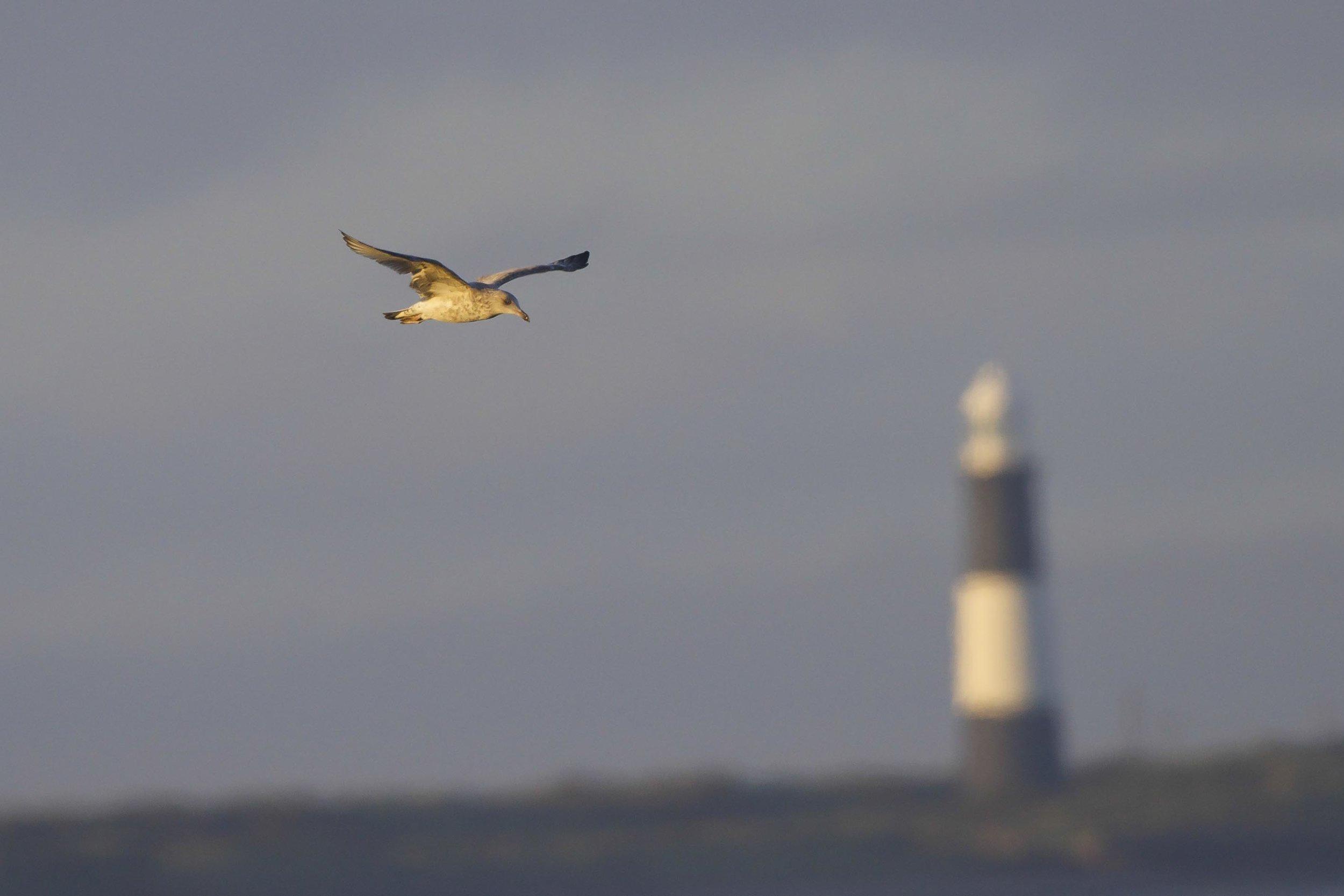 gannets (1 of 1)-2.jpg