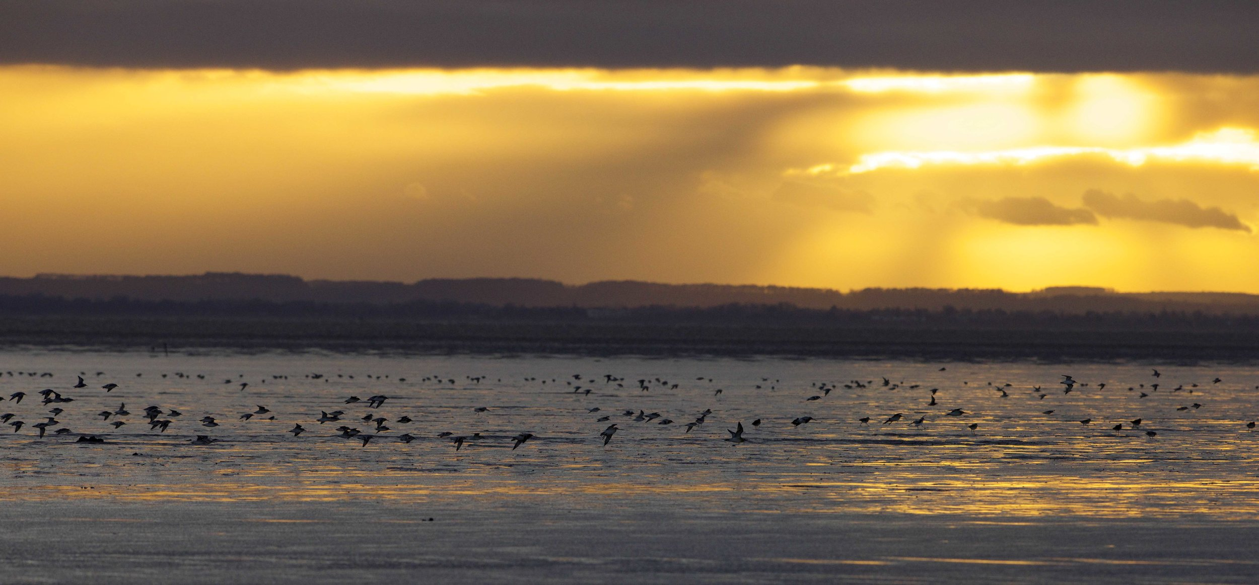 Waders at Kilnsea