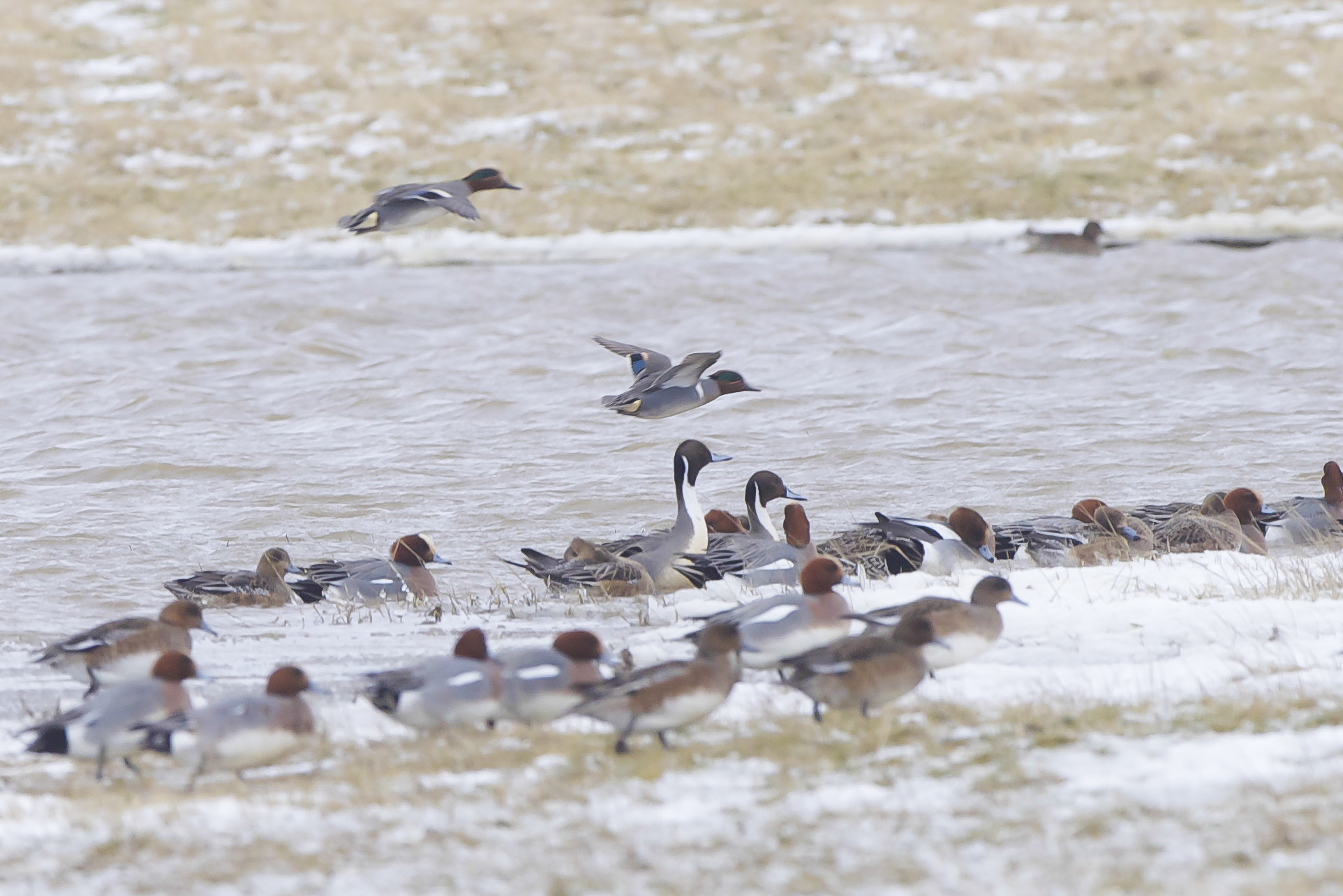 Kilnsea Wetlands (11 of 20).jpg