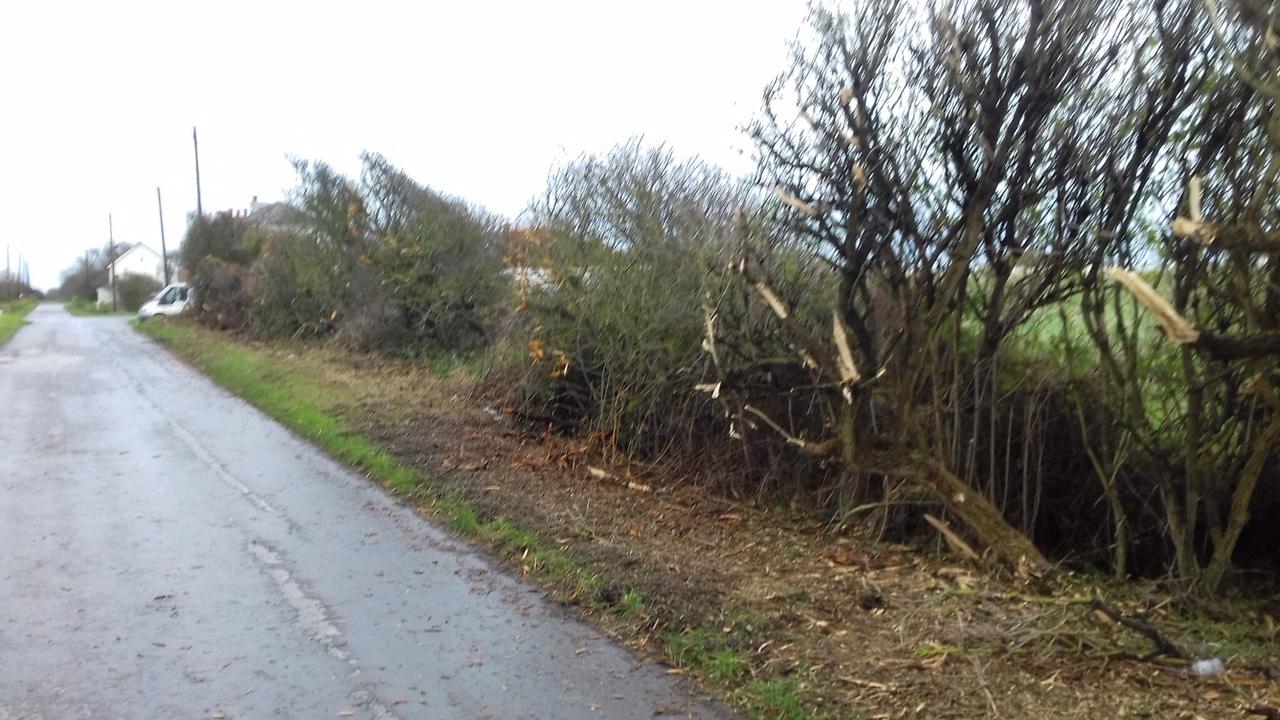 Decimated hedgerow on Spurn Road