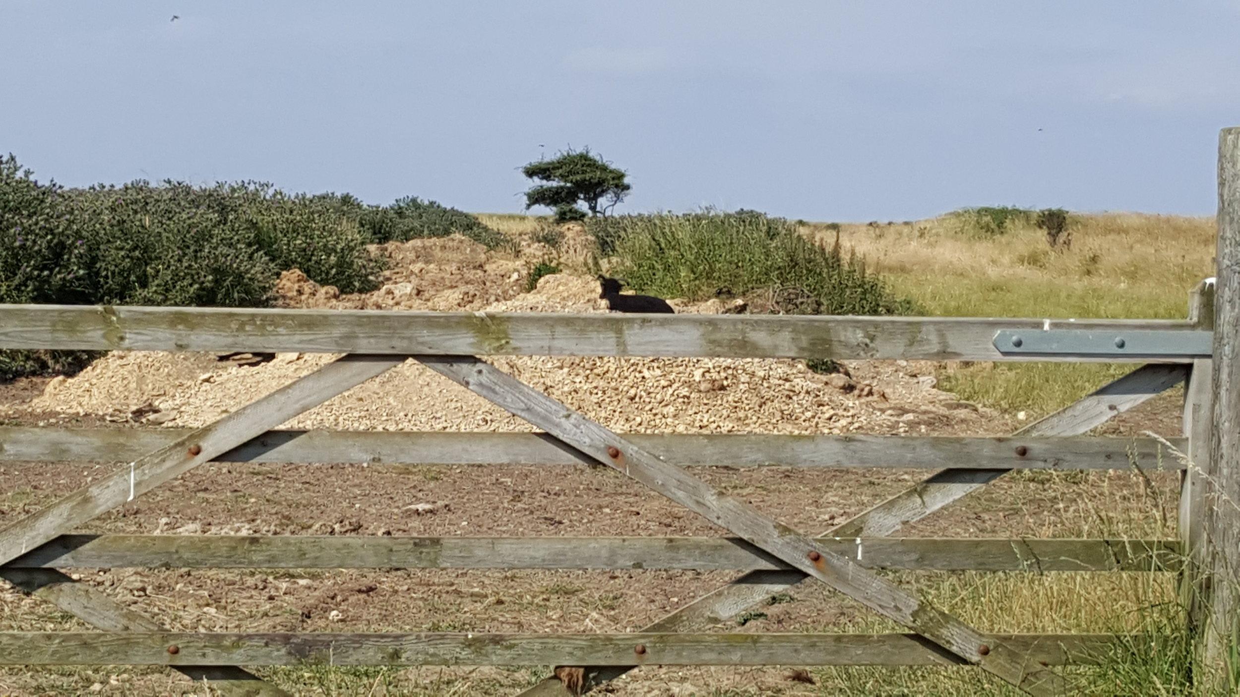 Builders rubble still in Well Field