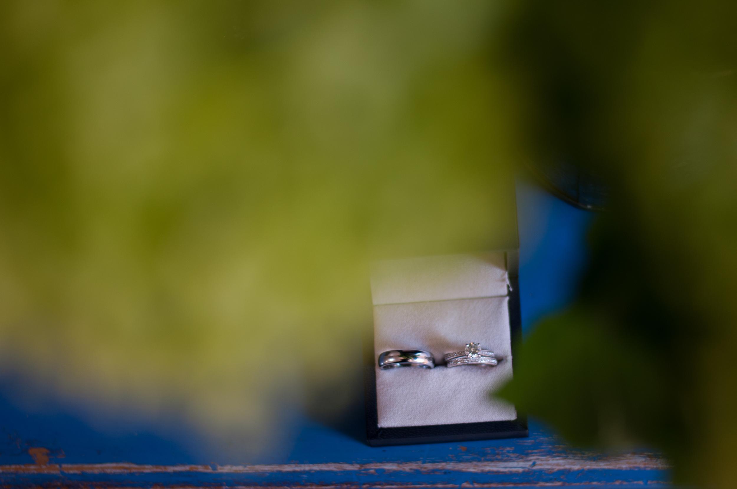 meredithdonnellyphotography-1.jpg