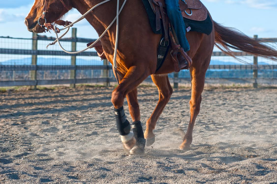 """""""Planes, automobiles, trains, they are great, but when it comes to getting the heart going, they can't touch a horse."""" -John Wayne"""
