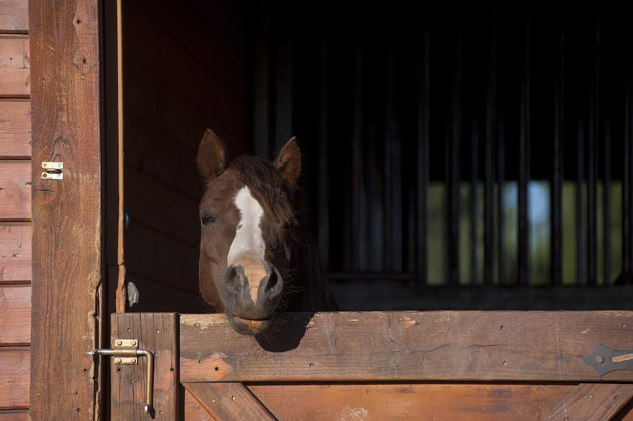 """""""No matter how bad your day is....there's always someone waiting for you at the barn."""""""