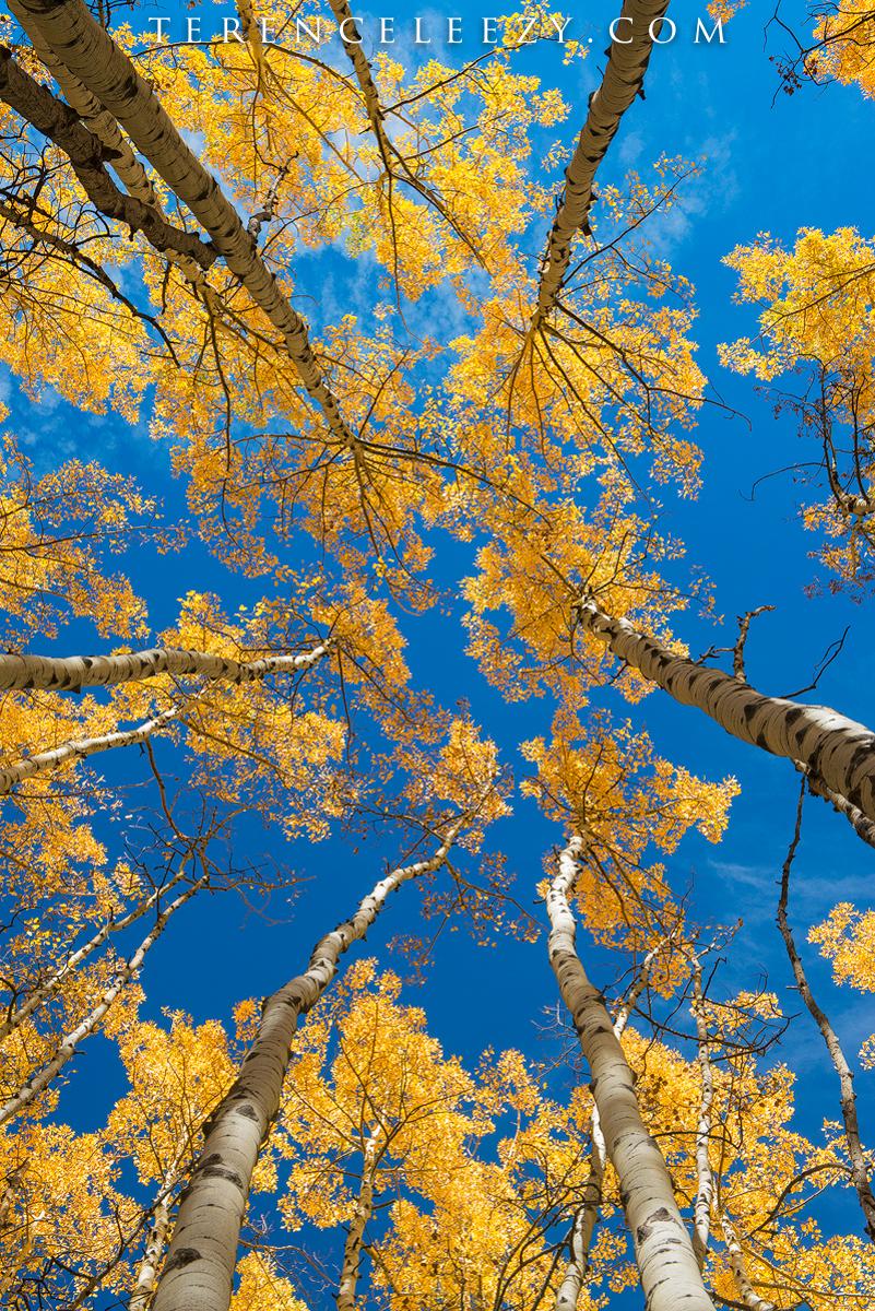 Golden crown against azure skies.