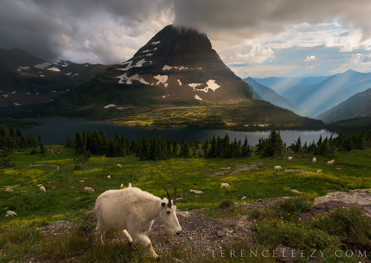 August - Glacier National Park, Montana
