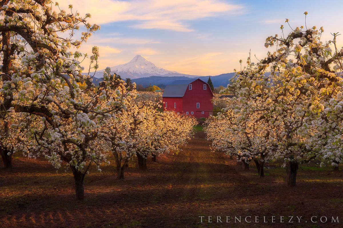 April - Red Barn, Hood River, Oregon