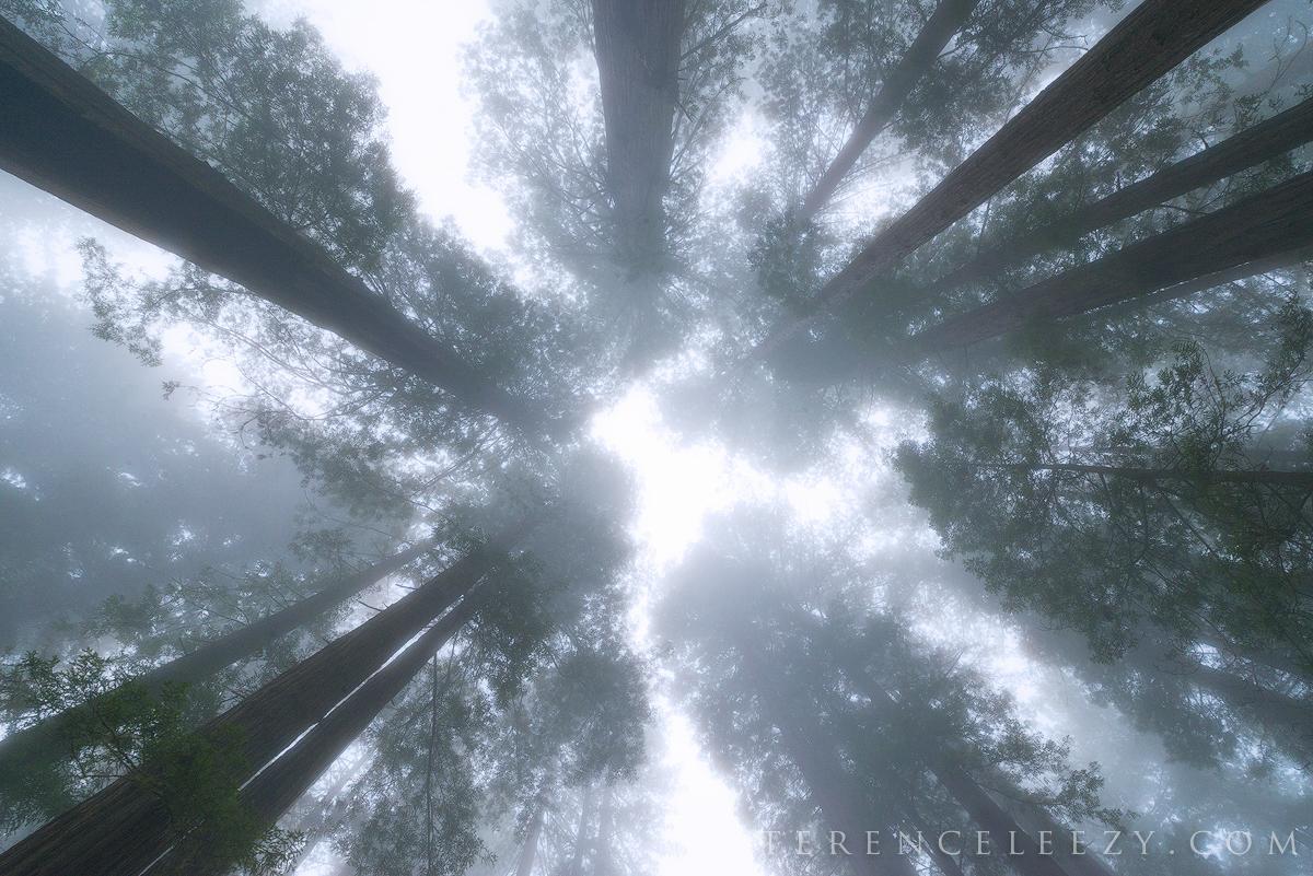 June - Redwood National Park, California.