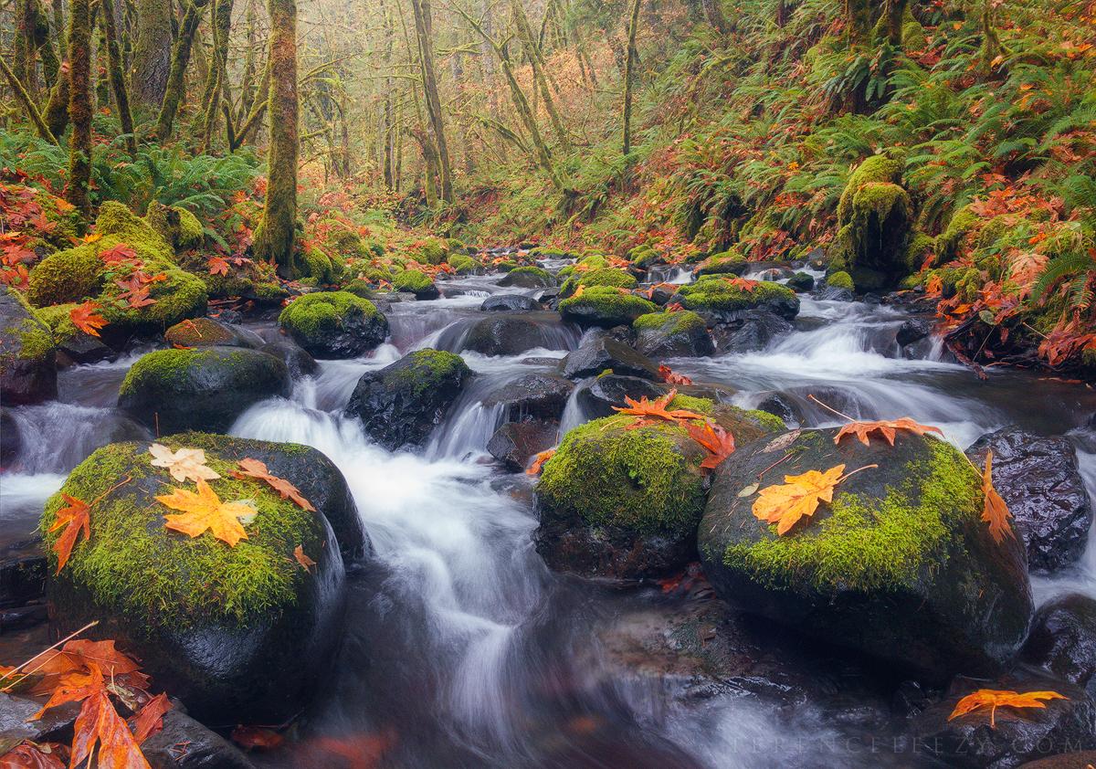 iPhone 7 Plus - Gorton Creek, Oregon