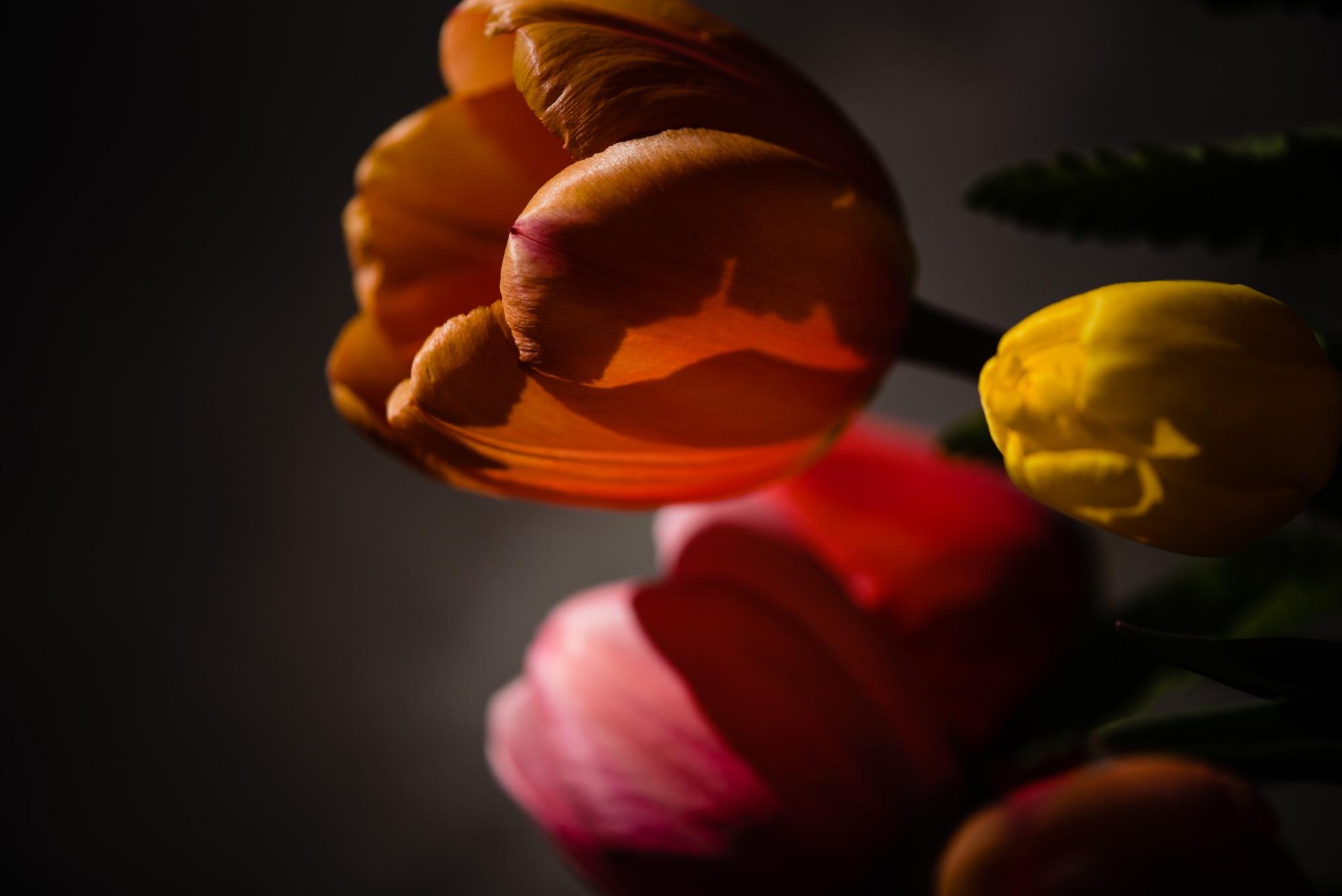 lindseyjanephotography_art011.jpg