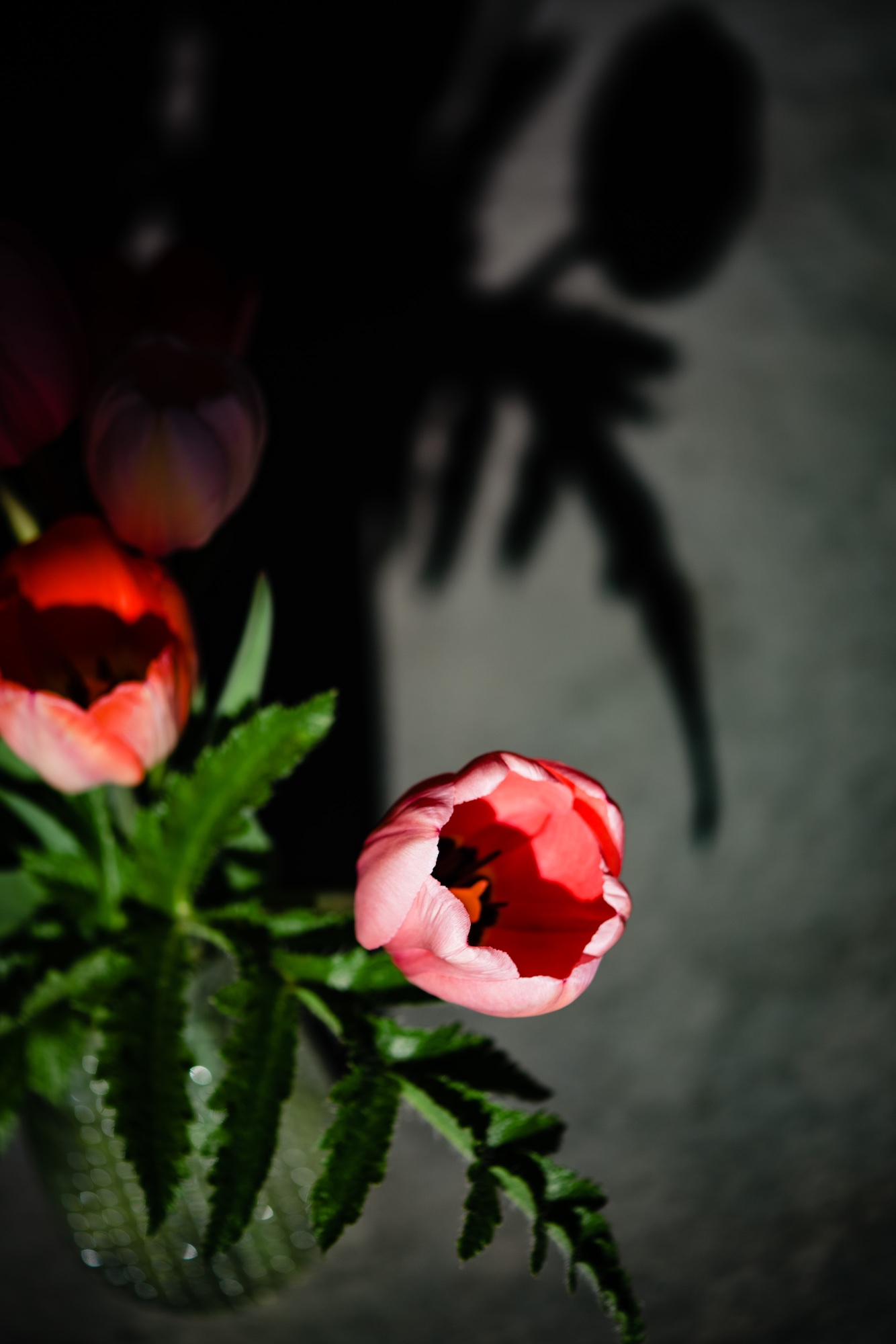 lindseyjanephotography_art014.jpg
