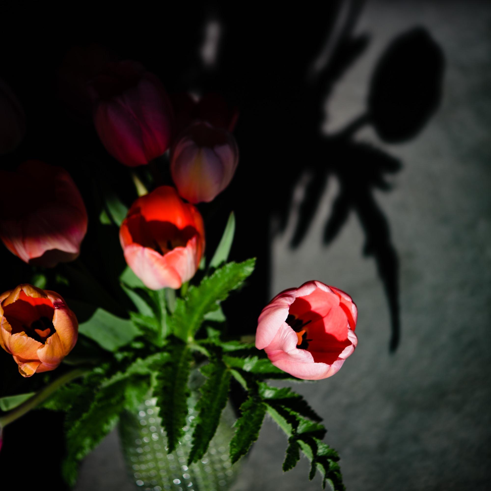 lindseyjanephotography_art015.jpg
