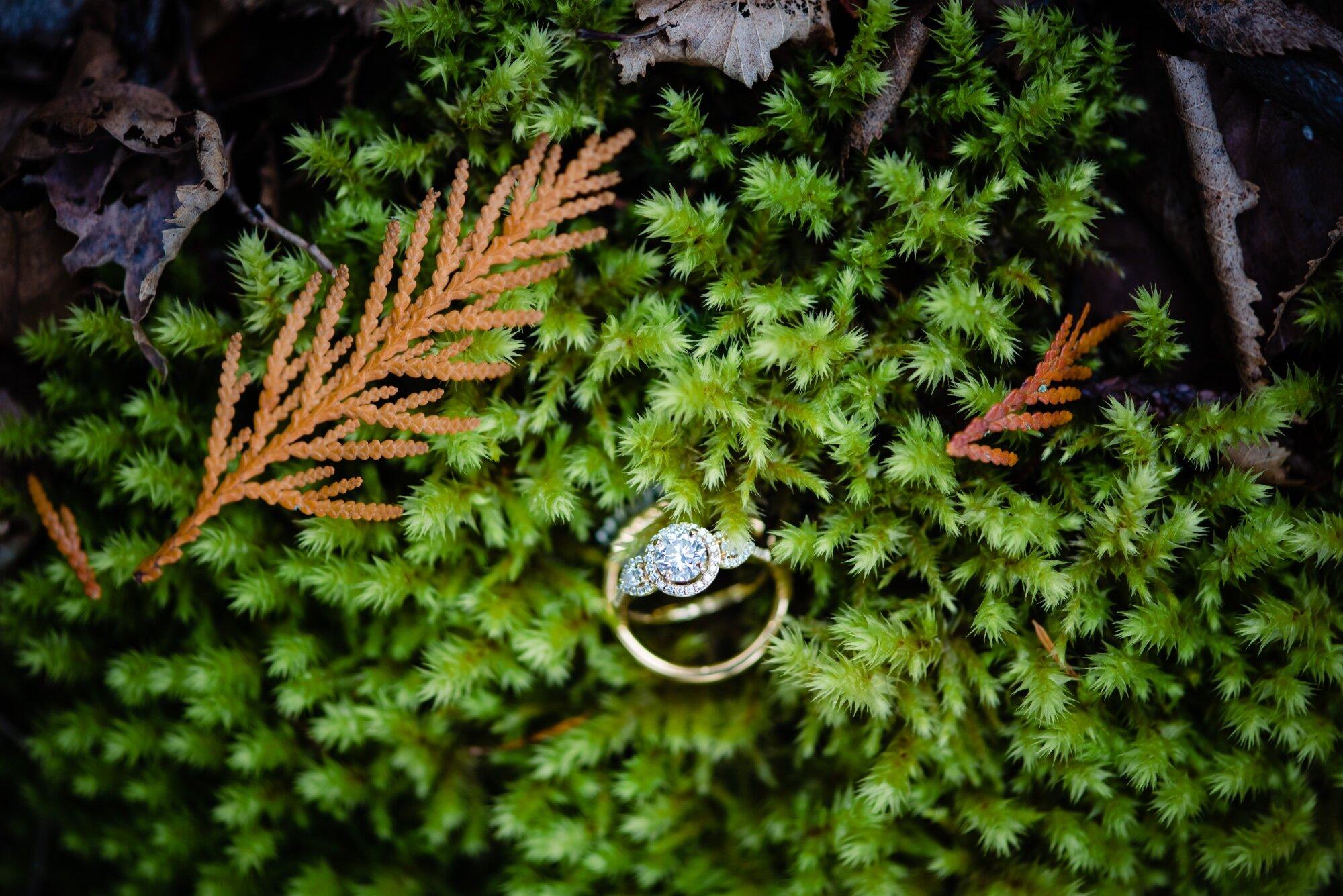 lindseyjanephoto_elopement0039.jpg