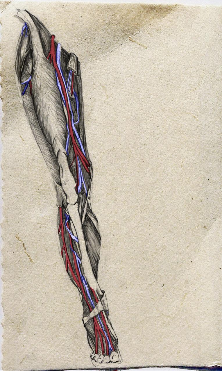leg-veins.jpg