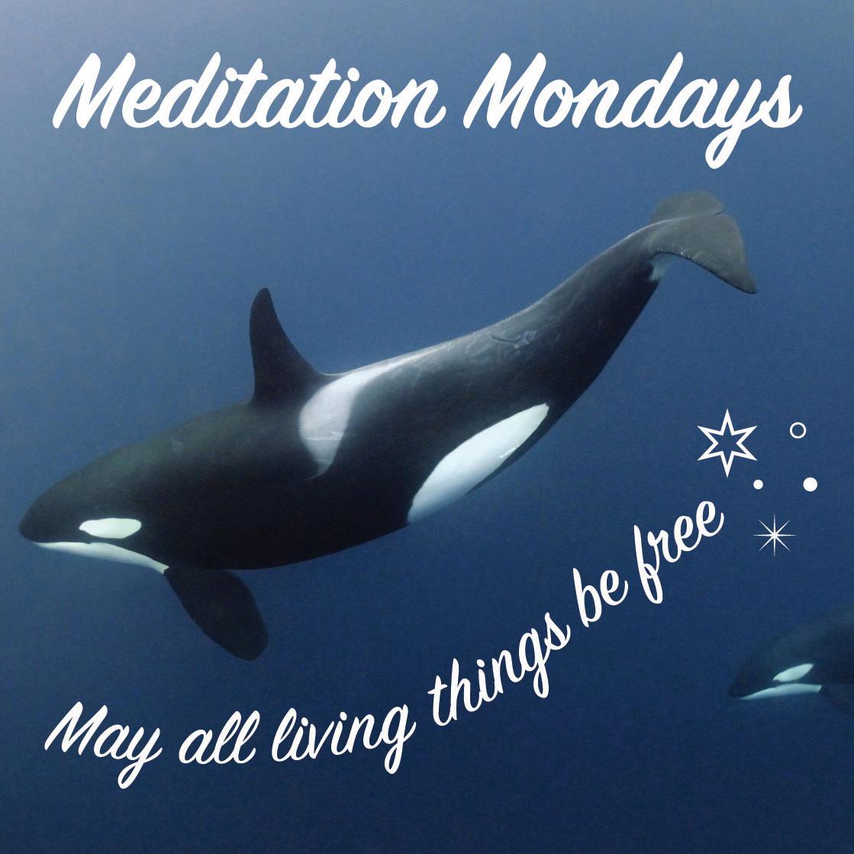 meditation-mondays.jpg