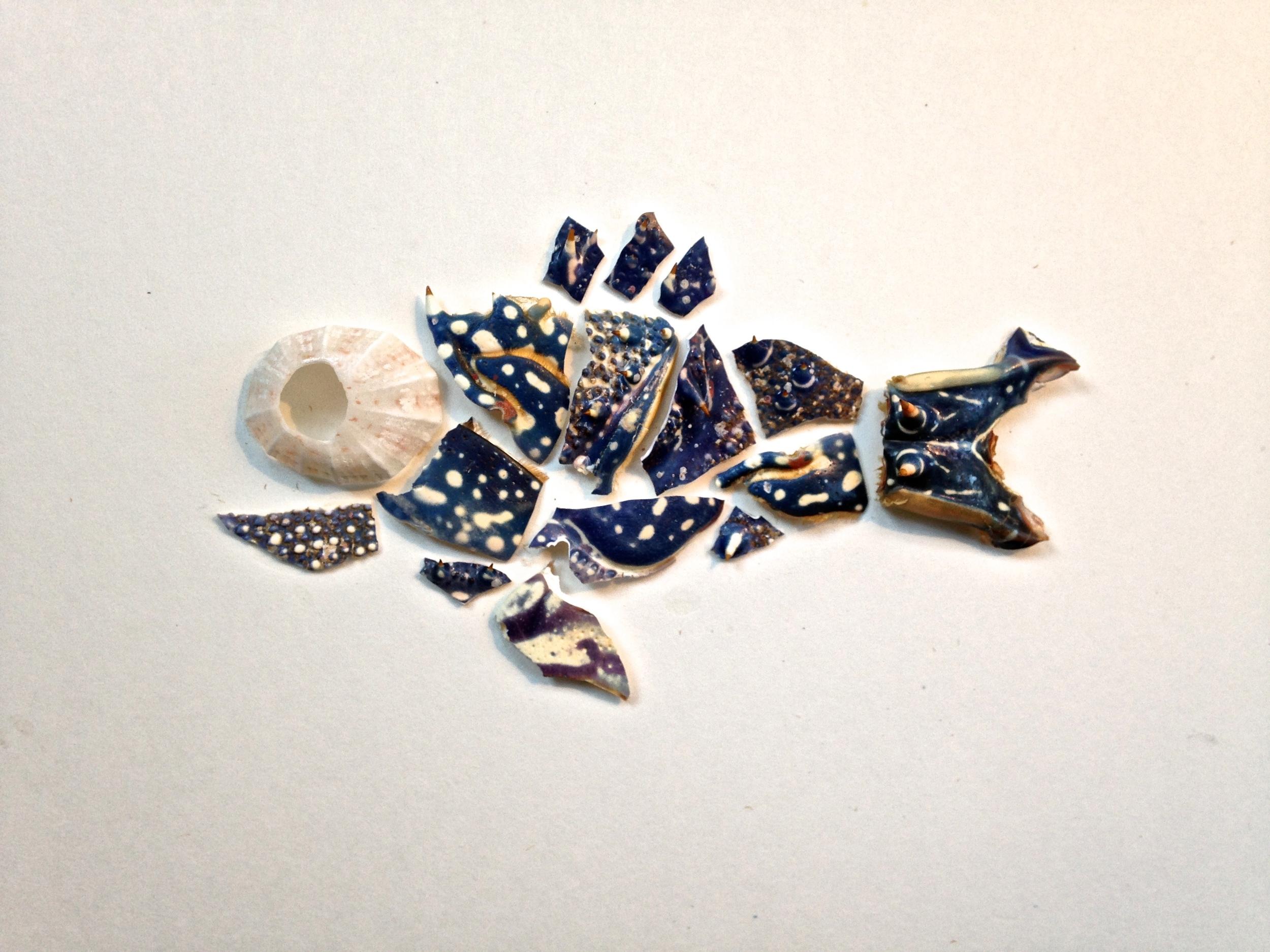 Fish fella from Caribbean lobster shell and barnacle (Barbuda)