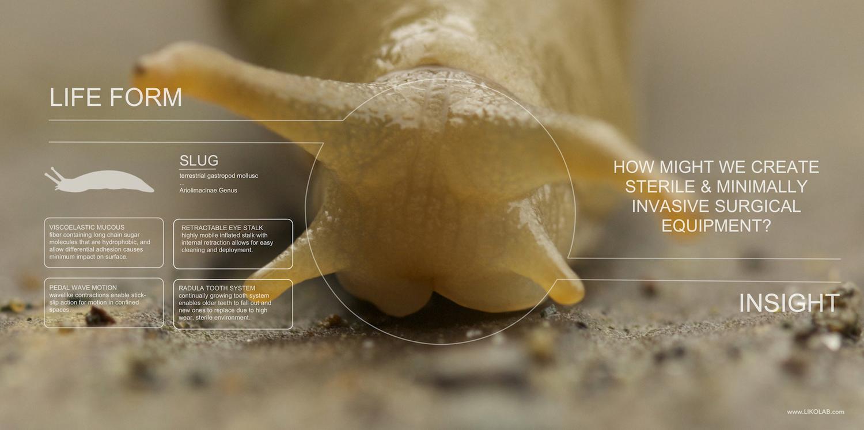 Biomimicry Goggles.jpeg