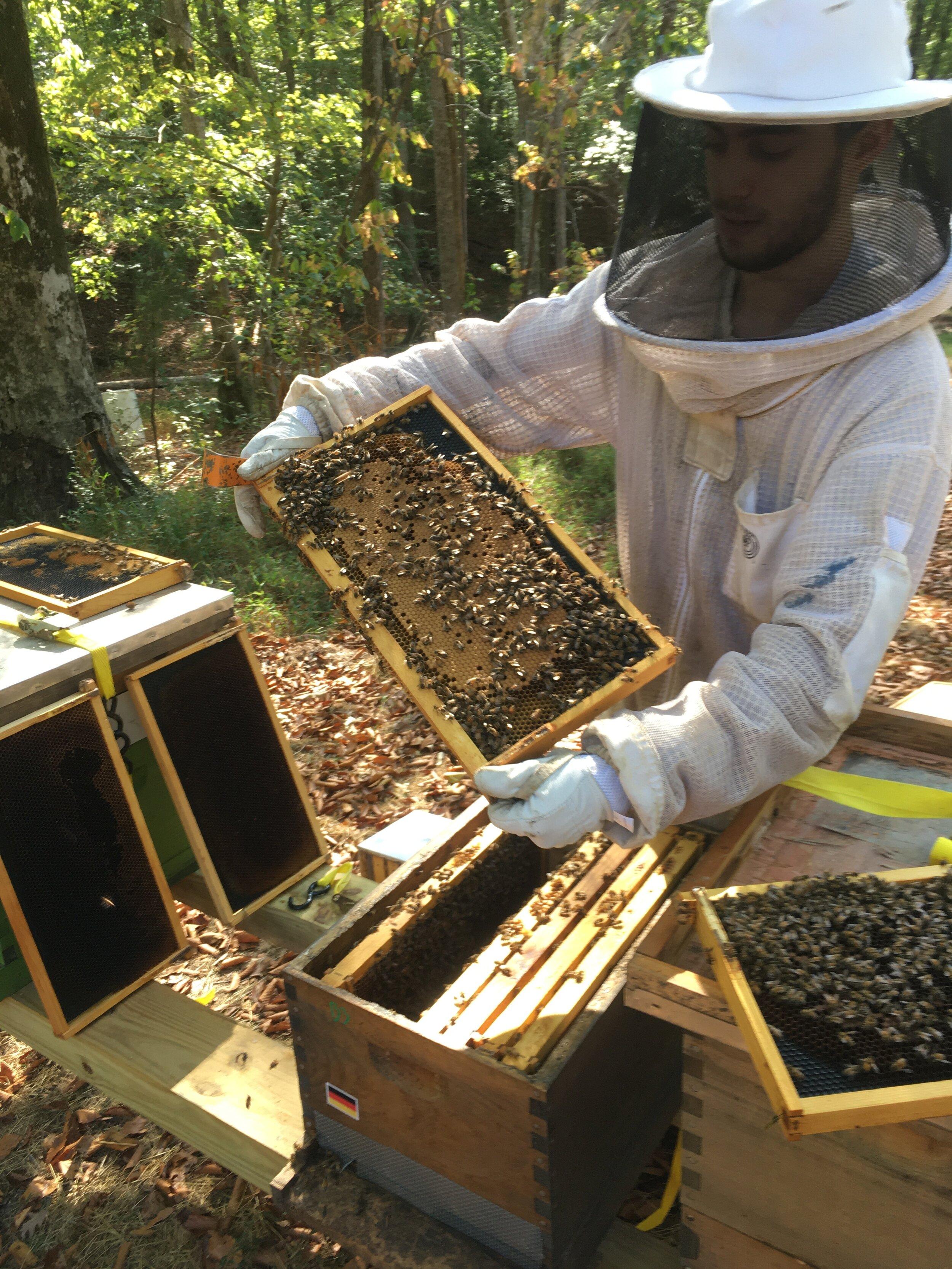 Beekeeping Erali Games [ 1333 x 1000 Pixel ]