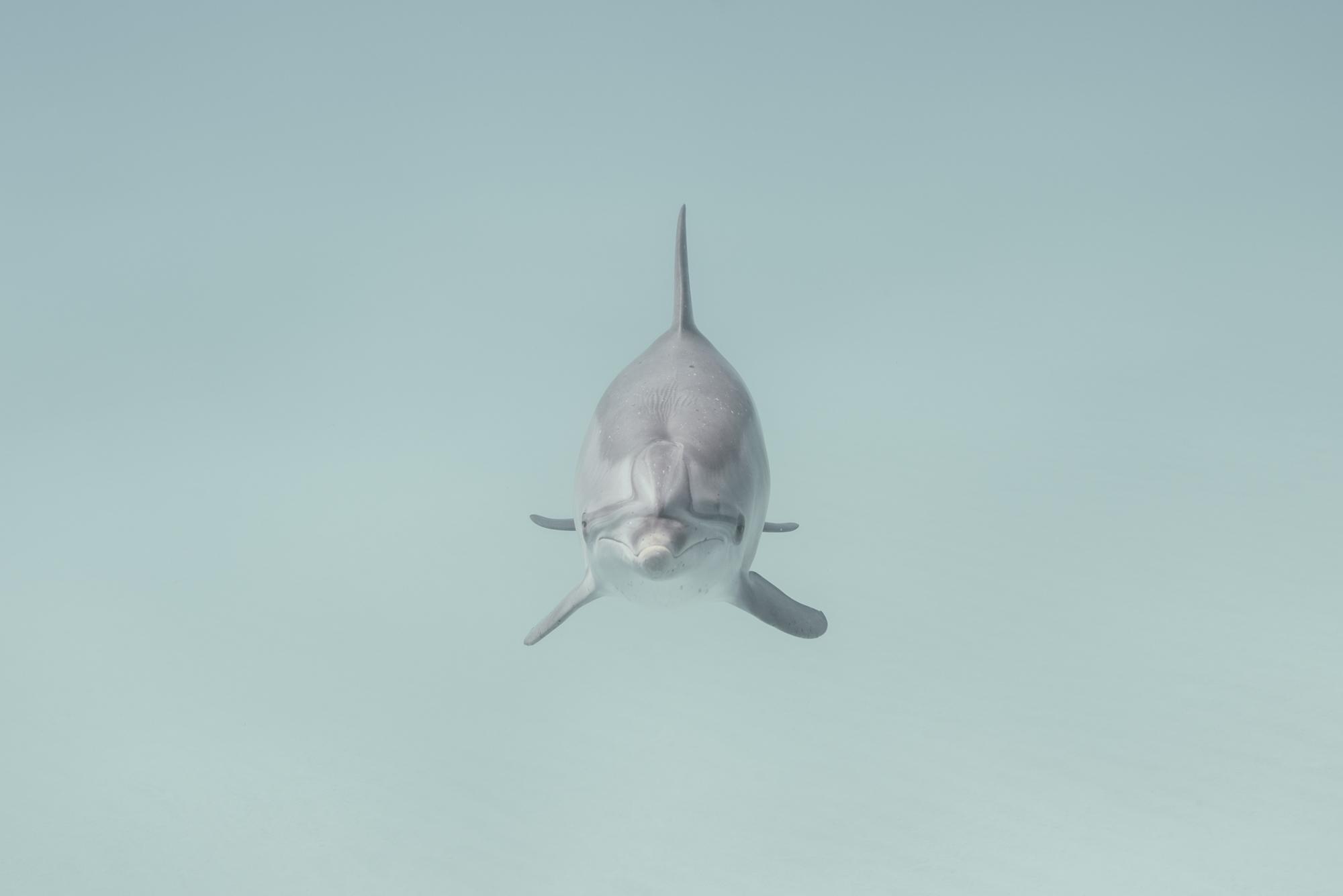 Dolphin charging.jpg