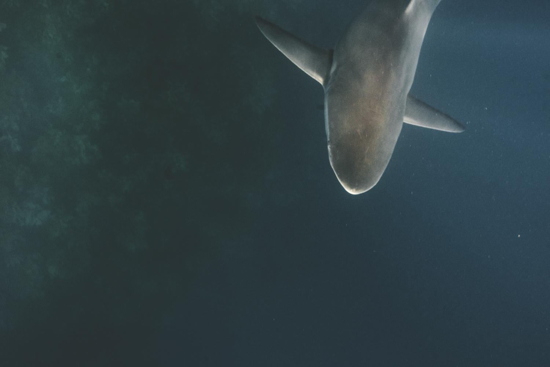 Sharks-245.jpg