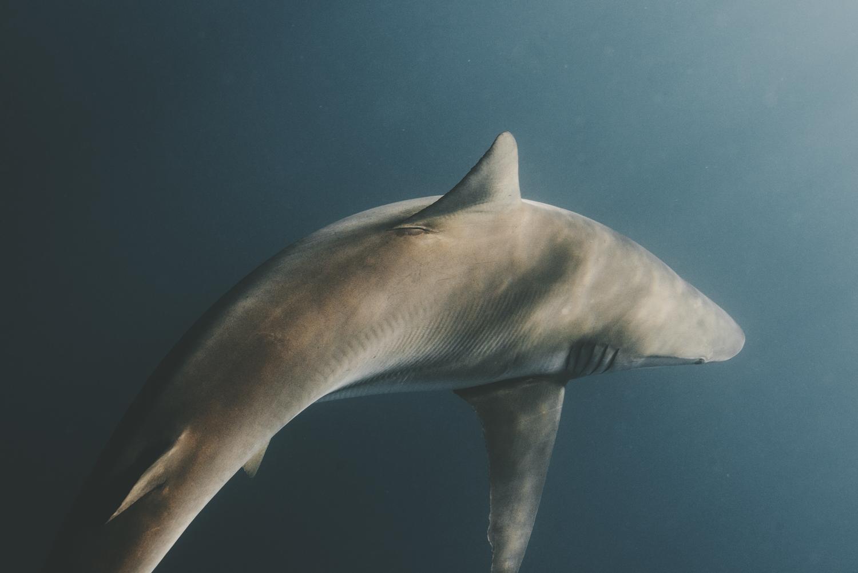 Marine Life -