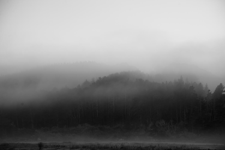 bw foggy_.jpg