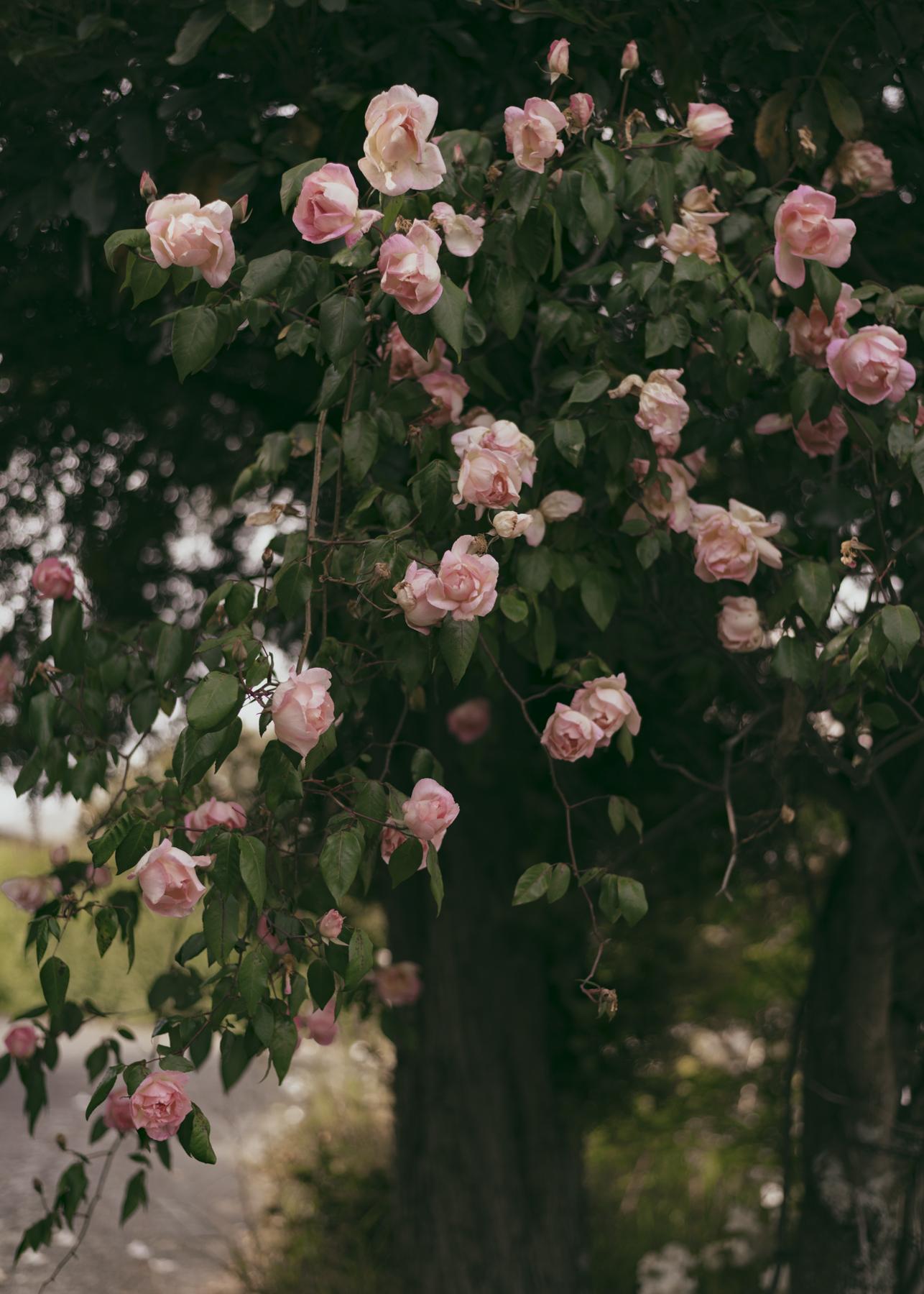 Street flowers.jpg