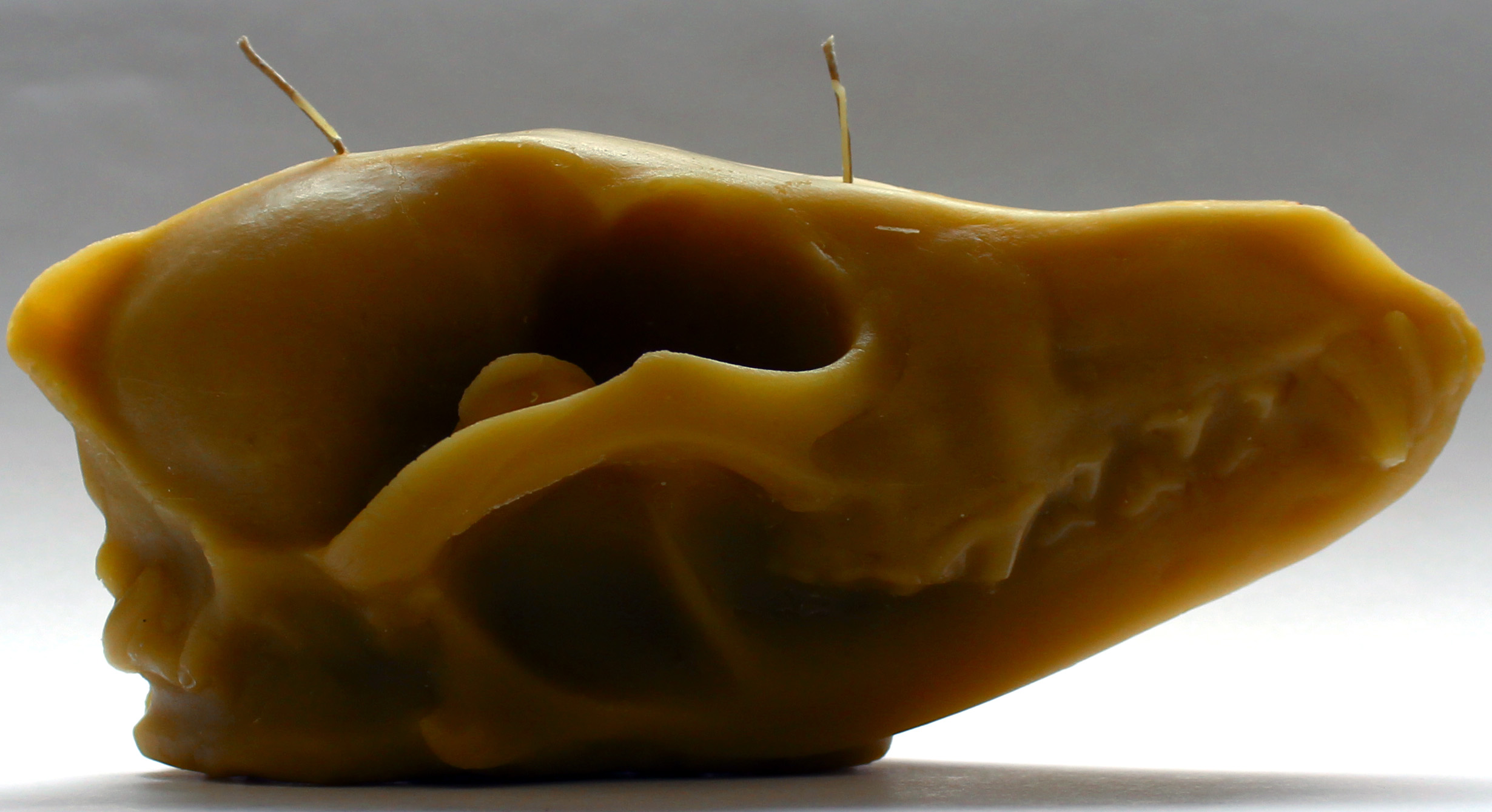 Coyote Skull Candle