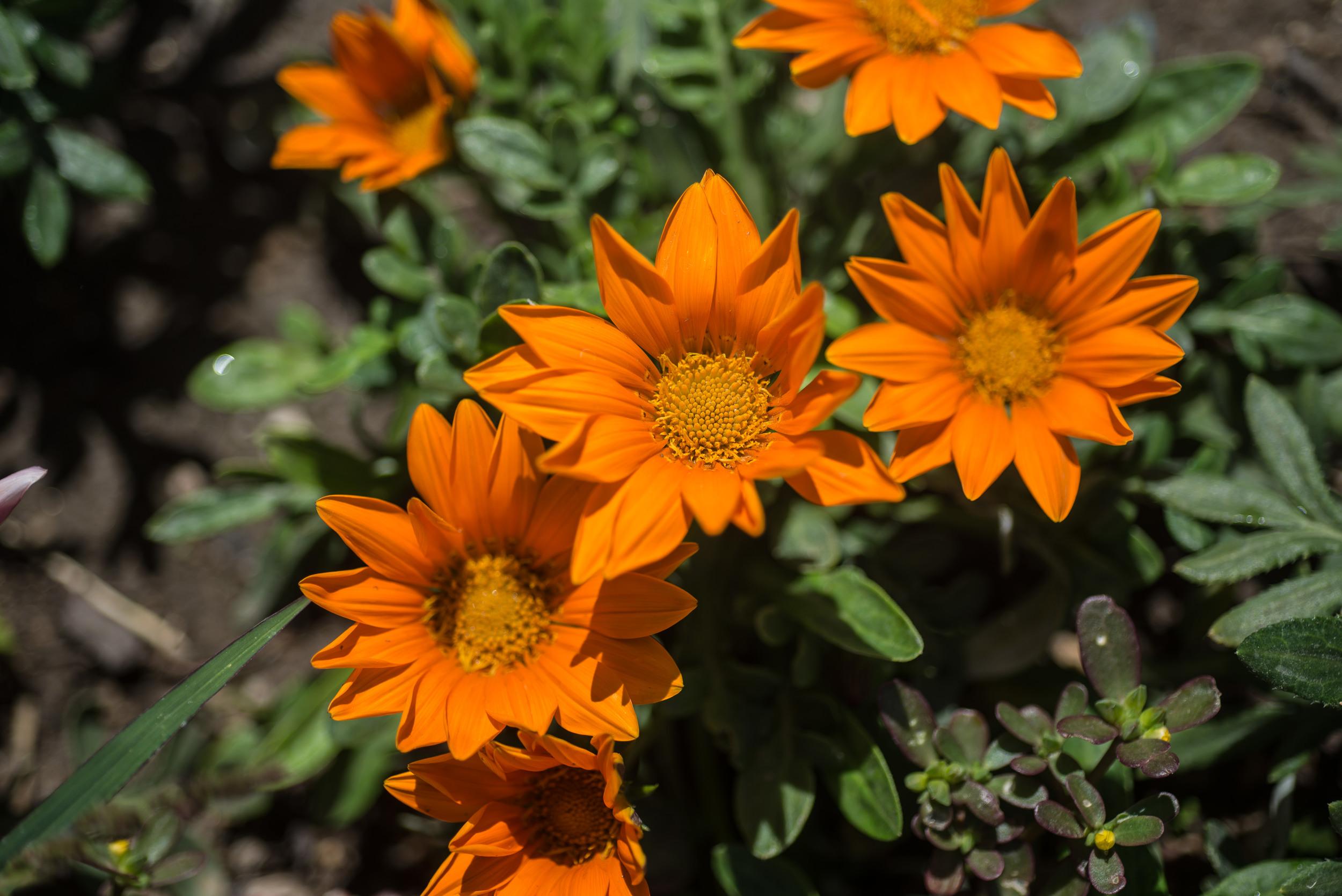 Palmilla-flowers-Los-Cabos
