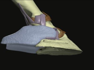 heel bulb laceration wound equine vet veterinarian doctor Calgary Cochrane Alberta