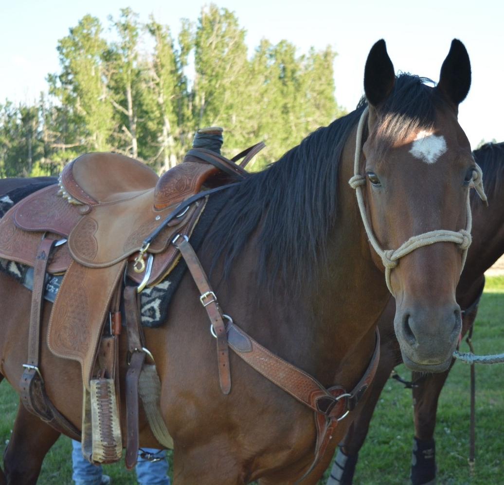 vaccine vaccination cold sick equine vet veterinarian doctor Calgary Cochrane Alberta