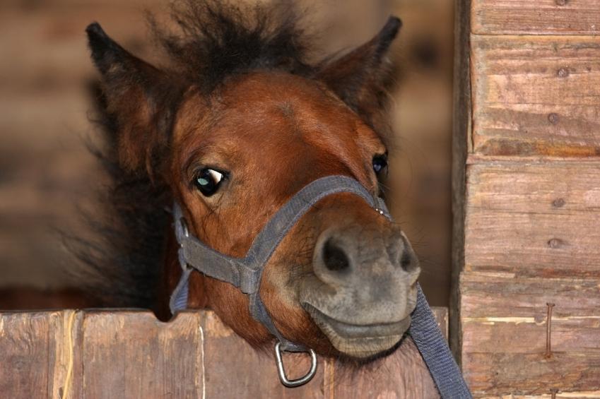 vaccine vaccination same day multiple equine vet veterinarian doctor Calgary Cochrane Alberta