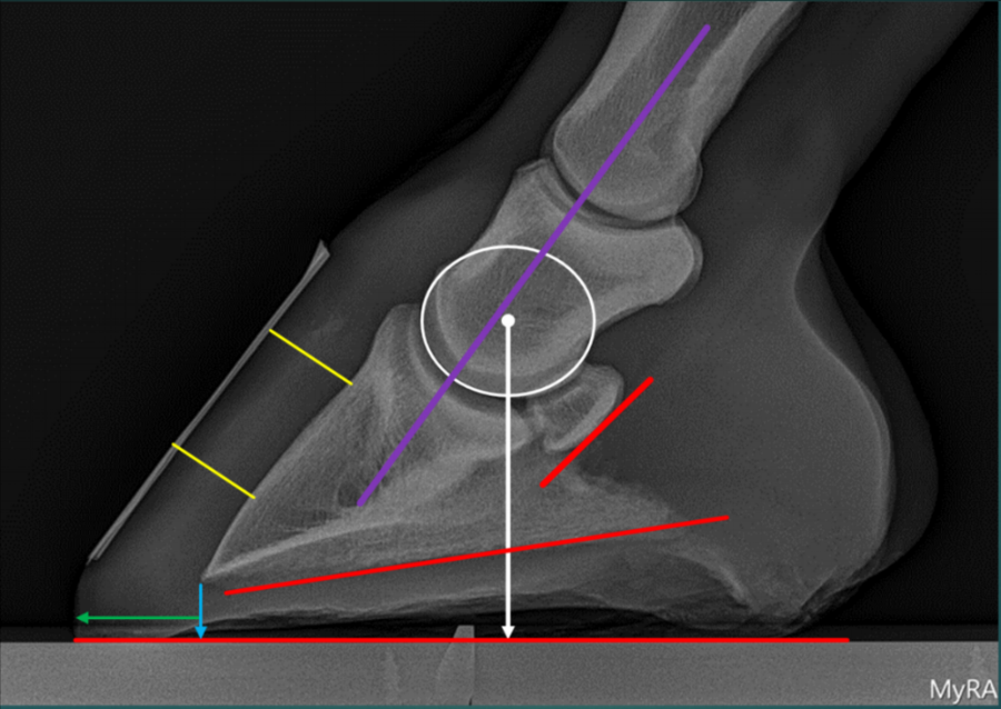 This diagram outlines all of the valuable information that can be gained from low-beam podiatry x-rays of a horse's feet.