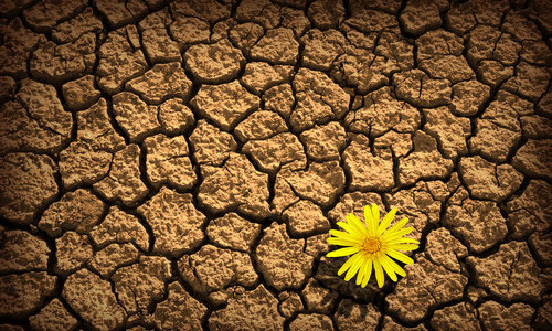 Resilience -